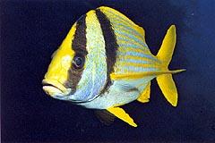 Fish ID Quiz 6